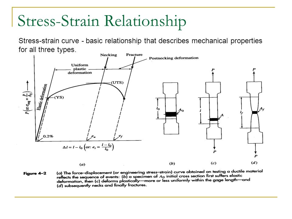 stress strain relationship muscles