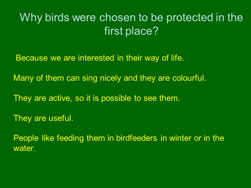 Why birds were chosen to be protected in the first place