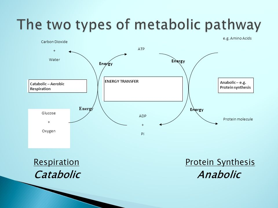 catabolic and anabolic metabolic reactions