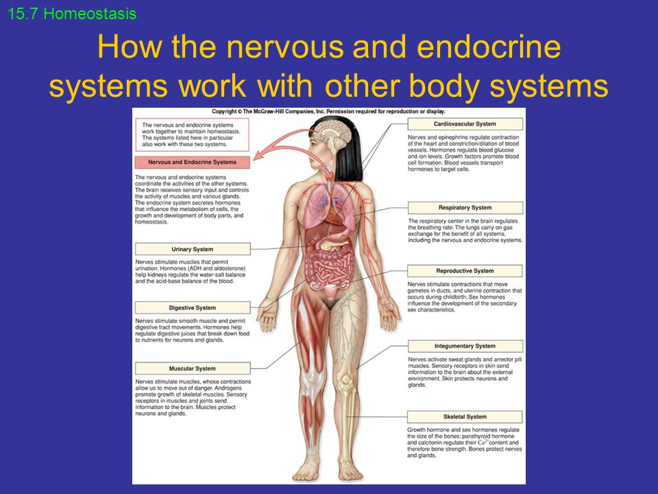 Chapter 15 Endocrine System Ppt Video Online Download