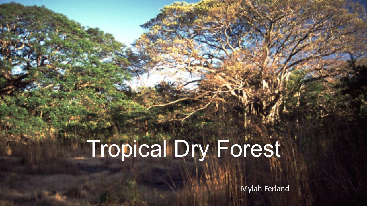 tropical dry forest Climate temperatures are high all year, but there is a better-developed dry season than in the tropical rain forest evapotranspiration exceeds precipitation for enough of the year to have a significant effect on the vegetation.