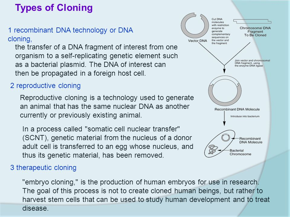 the human solution consumption or cloning The solution is not to regulate the technology itself but how it is applied human cloning falls conceptually between two other technologies.