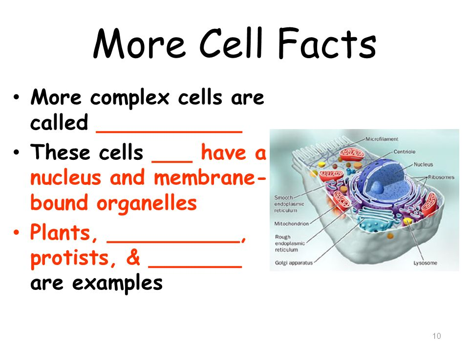 More Cell Facts More complex cells are called ___________