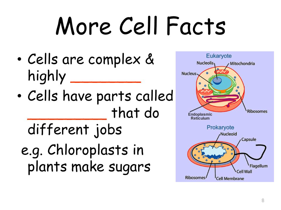 More Cell Facts Cells are complex & highly ________