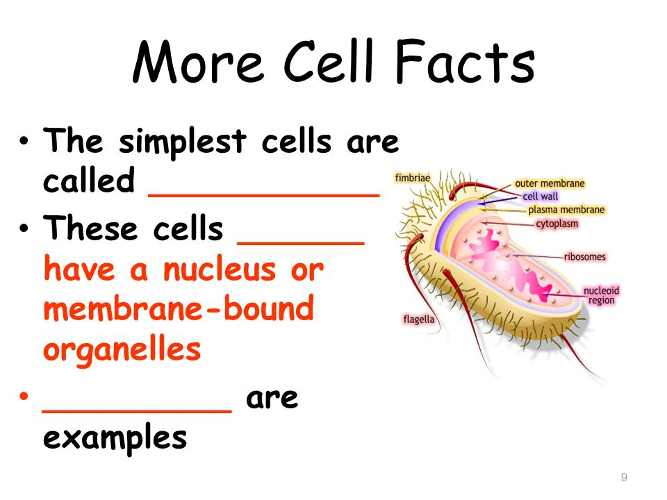 More Cell Facts The simplest cells are called ___________