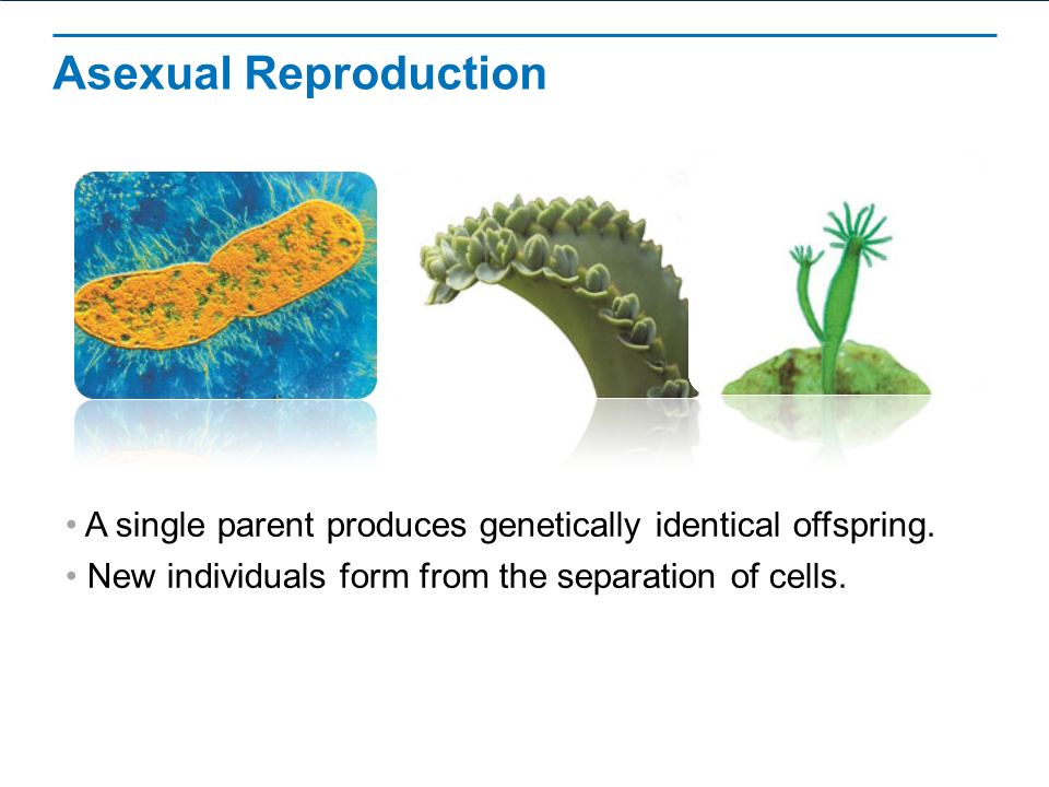 Cell Growth, Division, and Reproduction - ppt video online download