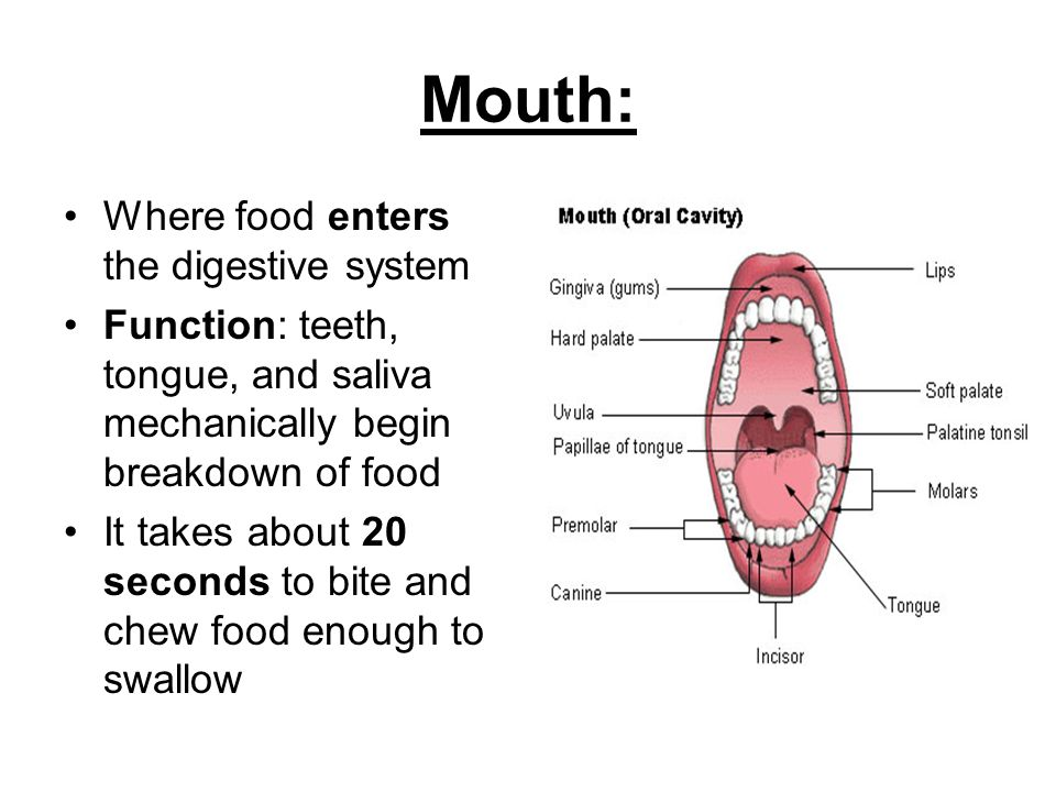 The Function Of The Mouth 72
