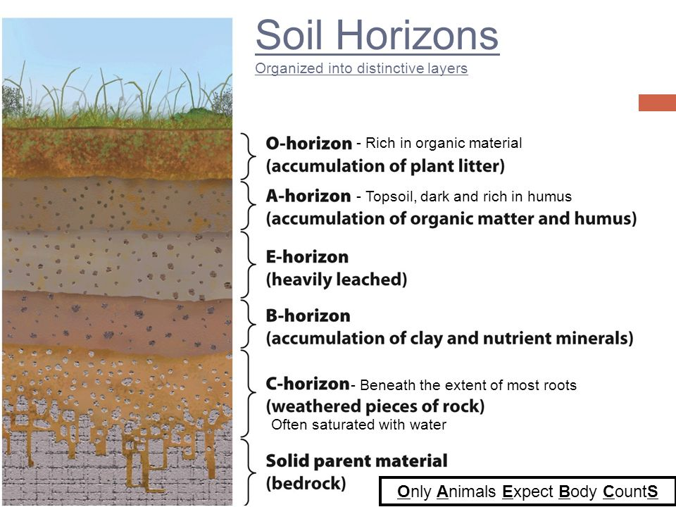 14 soil resources ppt video online download for Soil horizons layers