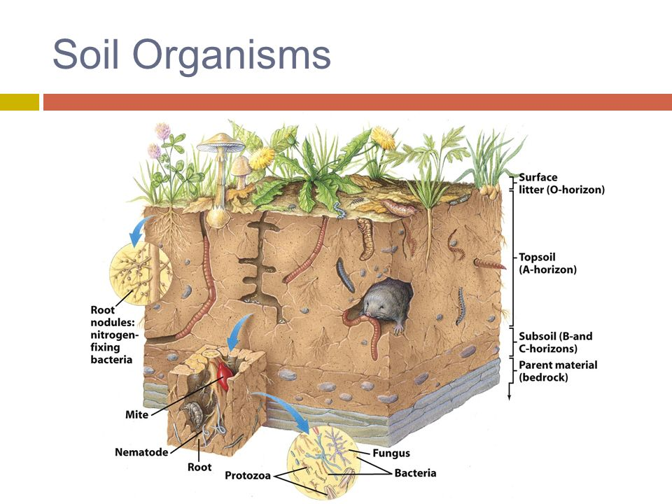 14 soil resources ppt video online download for Things in soil