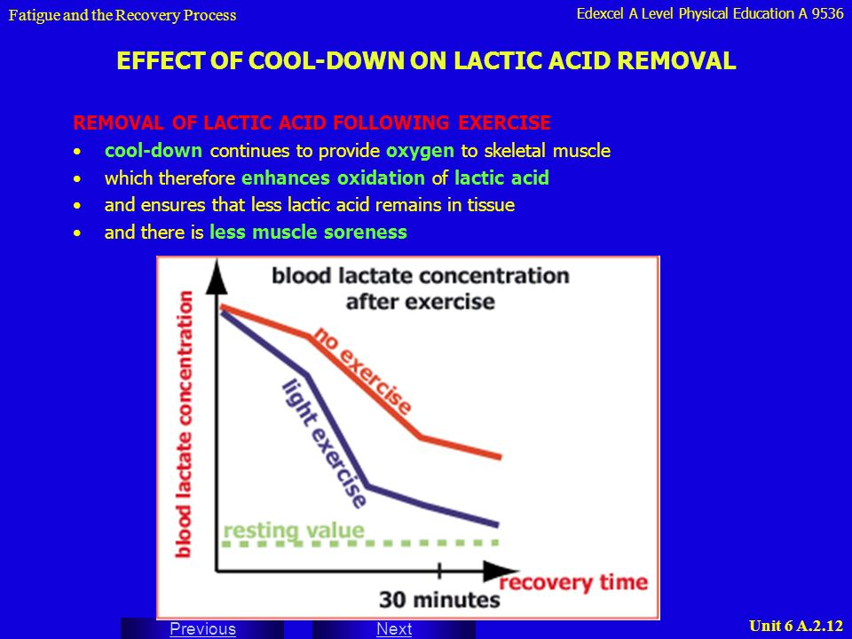the effect of exercise on lactic acid in muscles essay Lactic acid is more than 99%  effect on the function of muscles  as well due to the increased need to clear lactate from muscles during exercise.
