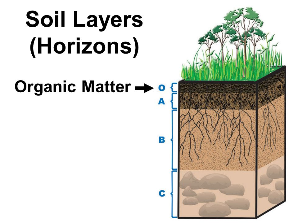 What is the composition of soil ppt download for Soil organic matter