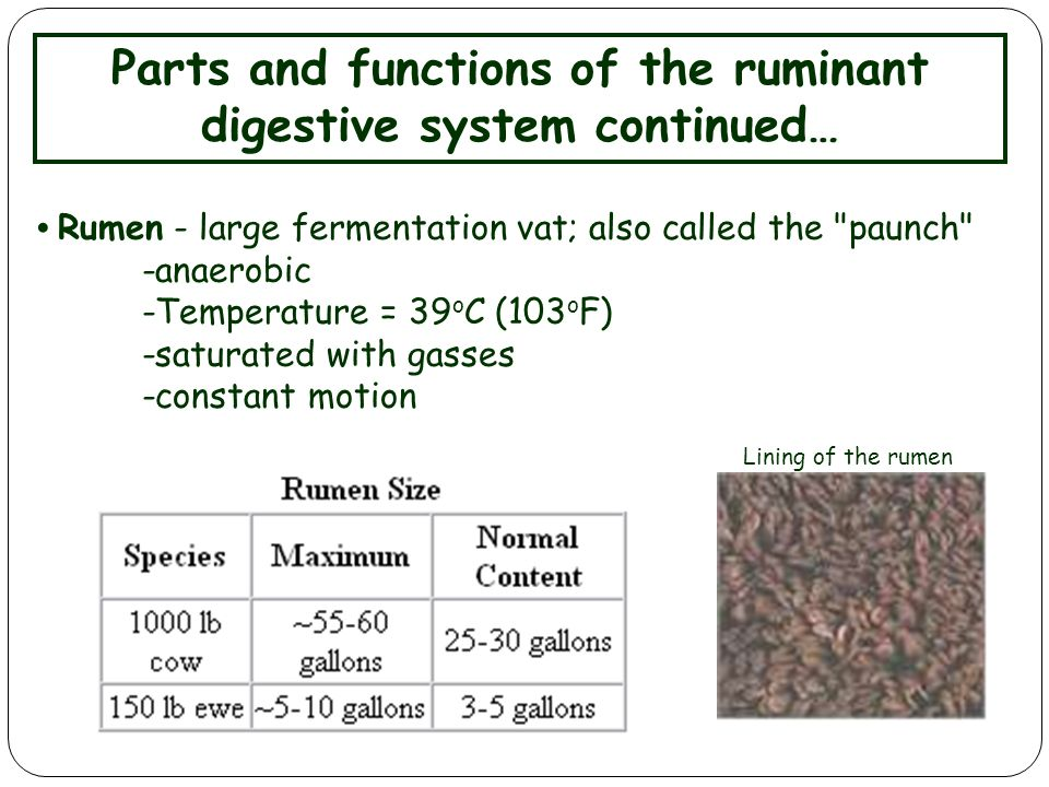 parts of the digestive system and their functions pdf