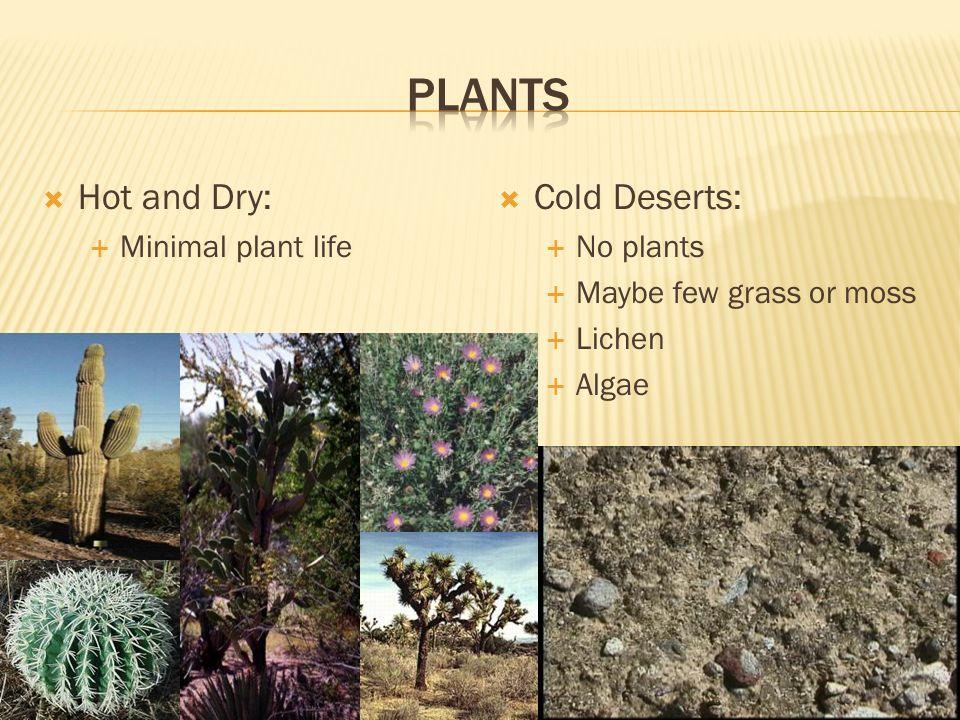 Desert Biome Biome Desert En Environmental Project Science Desert
