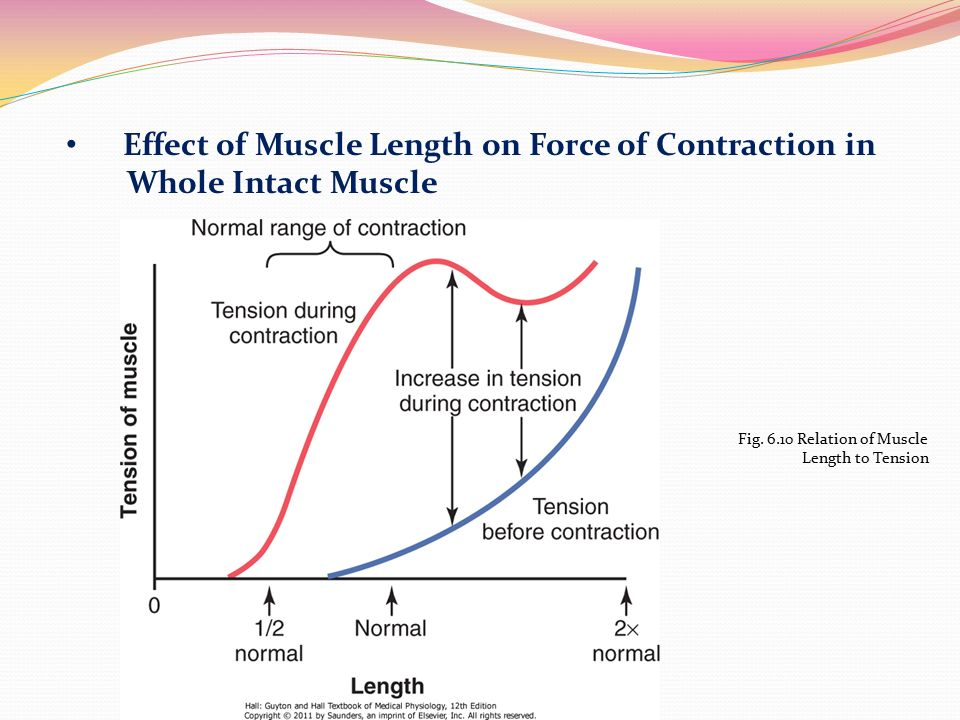 isotonic contraction and the effect of load on skeletal muscles essay Types of muscles essay  in a skeletal muscle contraction skeletal muscle fiber-skeletal muscle fibers  7 isotonic contractions and the load-velocity.