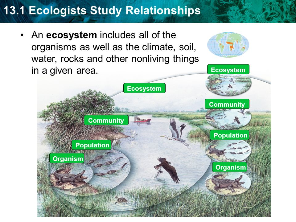 Species community and ecosystem