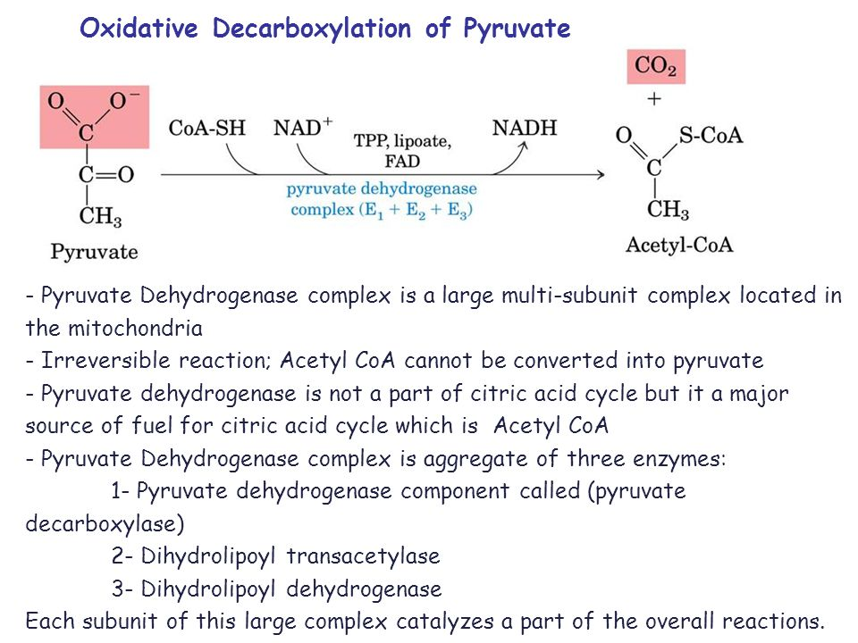 Oxidative decarboxylation of pyruvate is an irreversible reaction Once pyruvate is converted into acetylCoA it is not possible to use it to form glucose The PDH multienzyme complex is regulated allosterically by covalent modification It is directly inhibited by its products NADH and acetylCoA and by ATP
