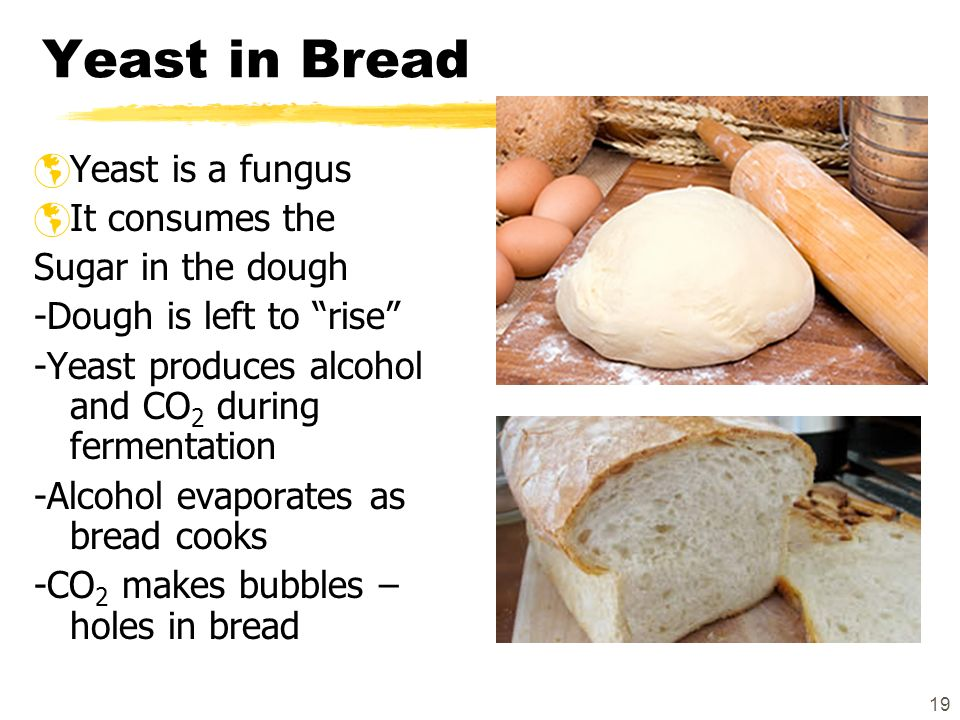 how to make co2 with yeast