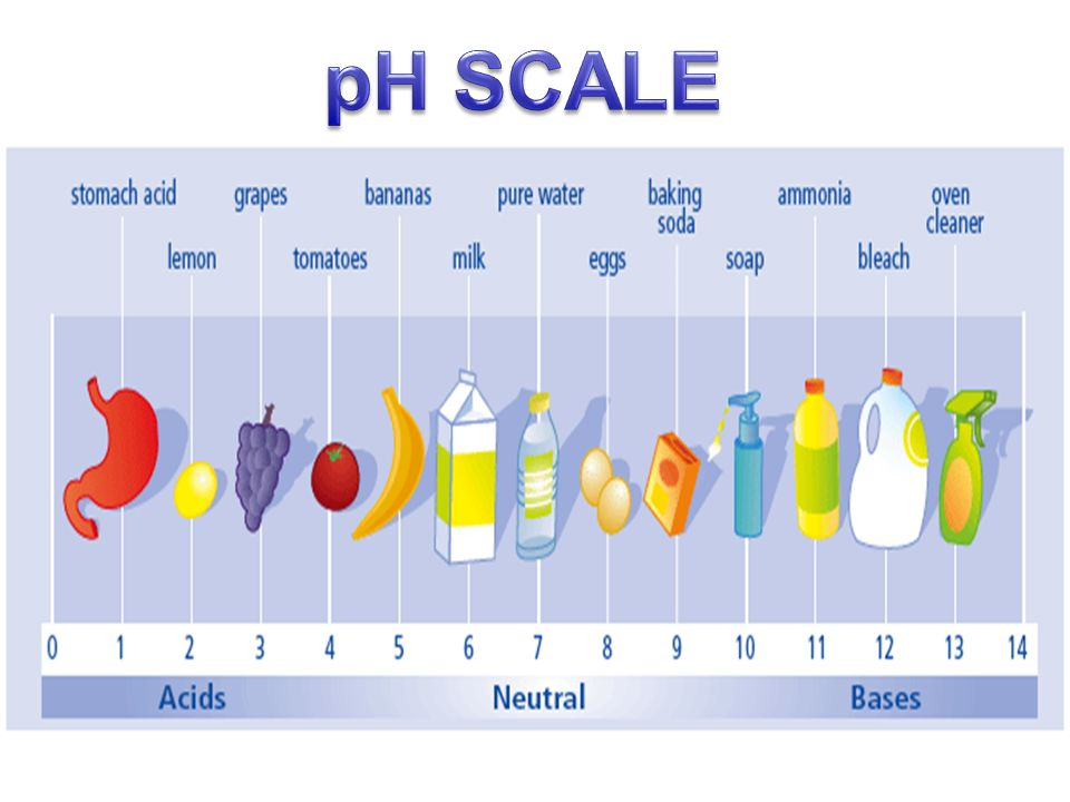 ACIDS AND BASES E.Q.: How does the pH of a solution allow ...
