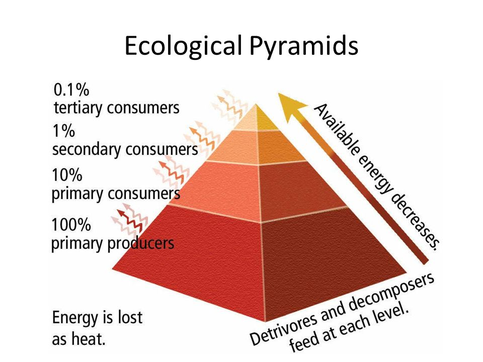 energy flow in an ecosystem ppt video online download