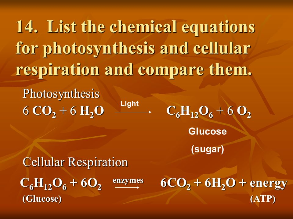 Test Review Chapter 5-Photosynthesis and Cellular ...