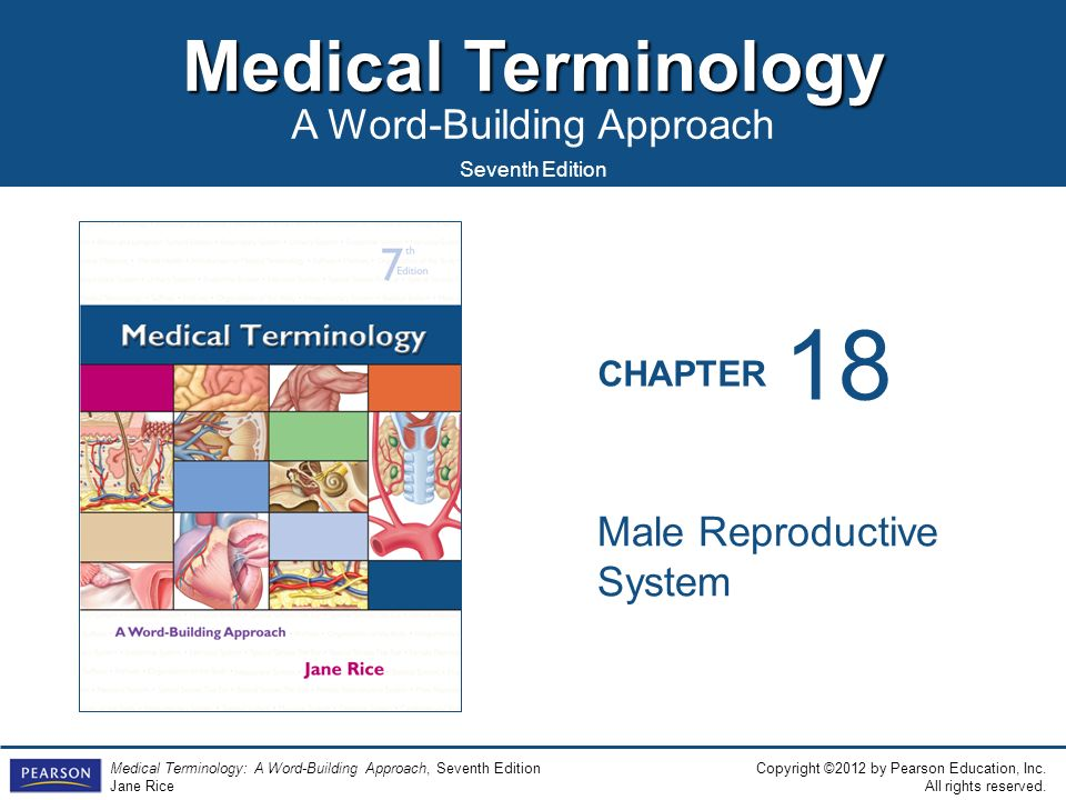 18 Male Reproductive System