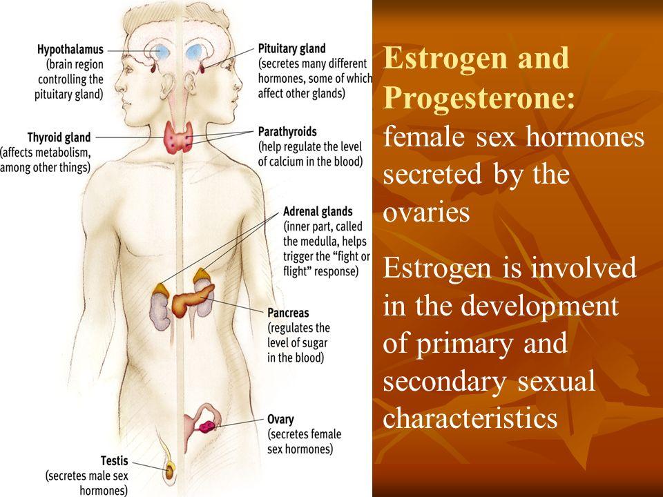 List of Female Hormones LIVESTRONGCOM