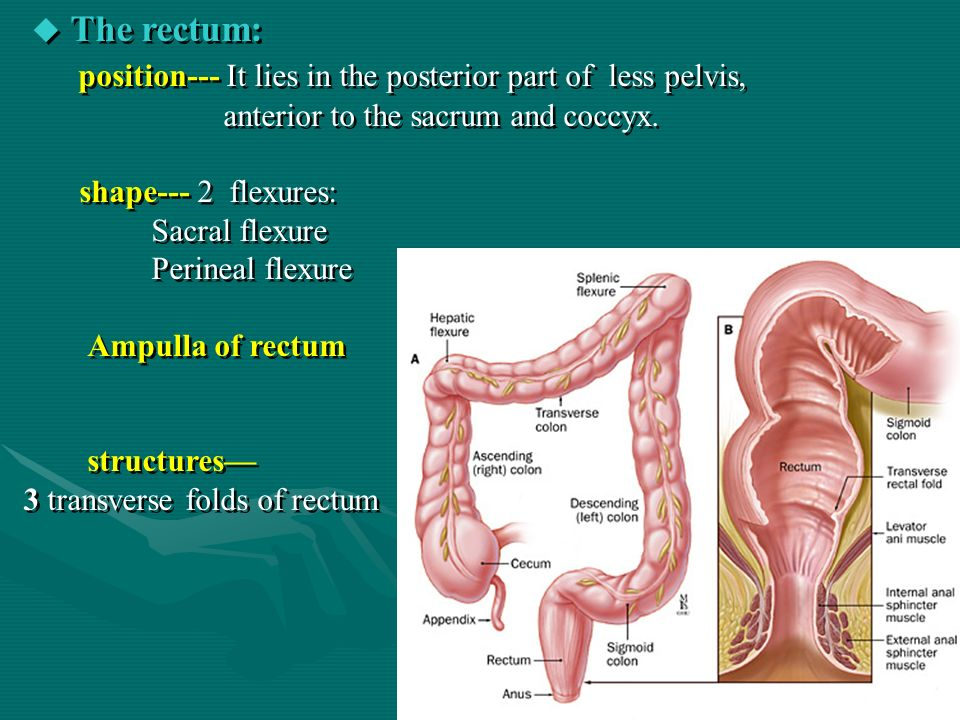 rectal anal sphincter