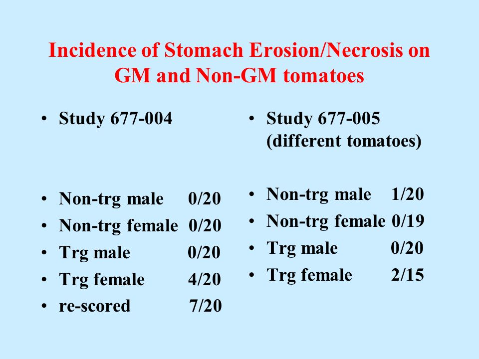 Incidence of Stomach Erosion/Necrosis on GM and Non-GM tomatoes