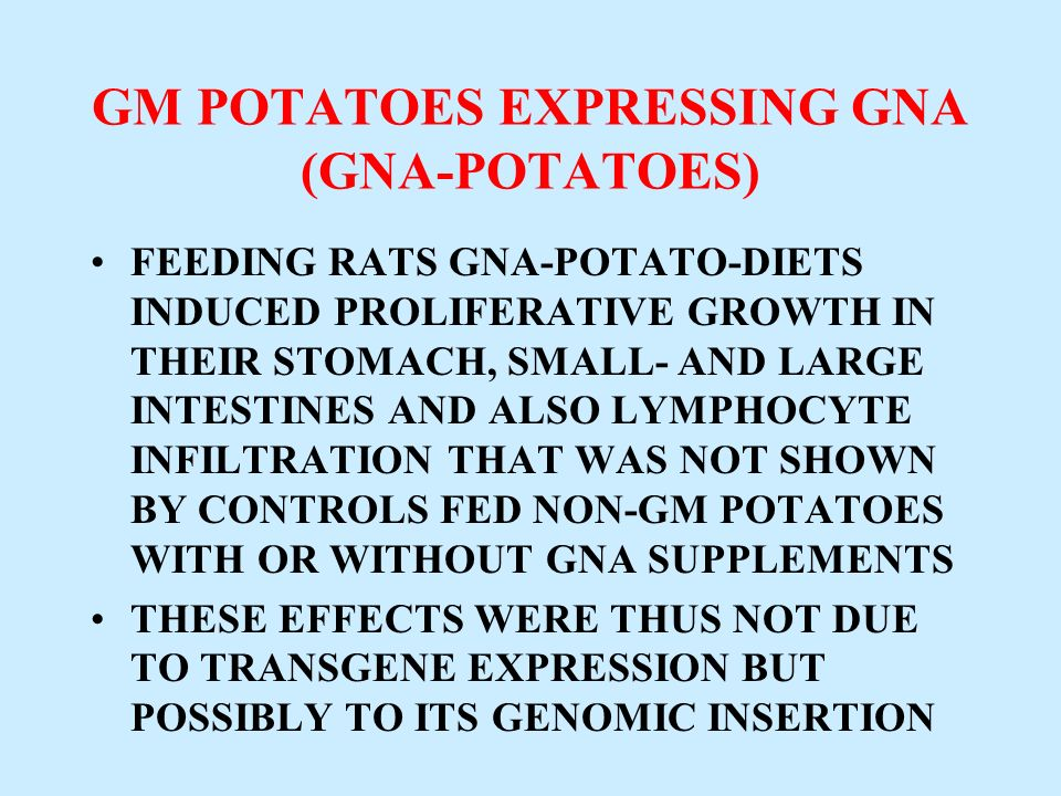 GM POTATOES EXPRESSING GNA (GNA-POTATOES)