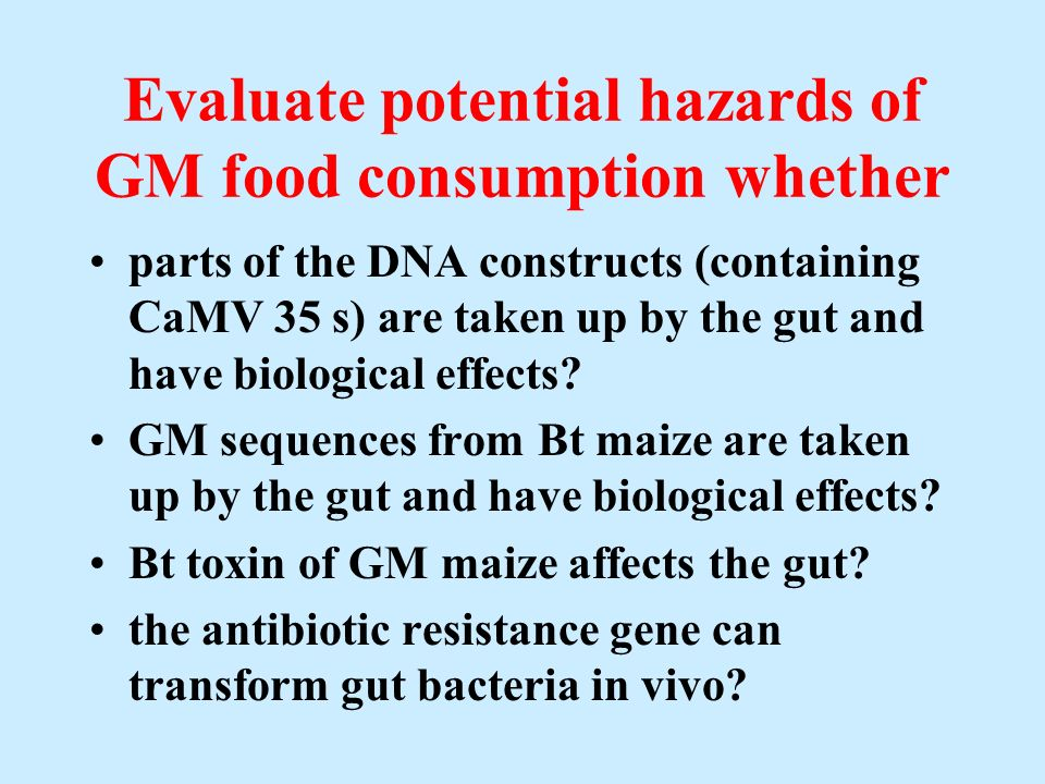 Evaluate potential hazards of GM food consumption whether