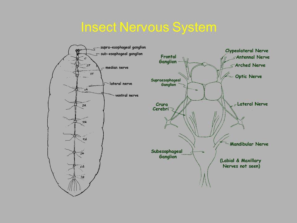 Entomology 462 Insect Morphology Ppt Video Online Download