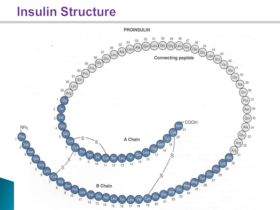beta cells how the organelles work together to produce insulin To get pancreatic cells to produce insulin instead of glucagon turns glucagon-producing alpha cells into insulin and beta cells work together to.