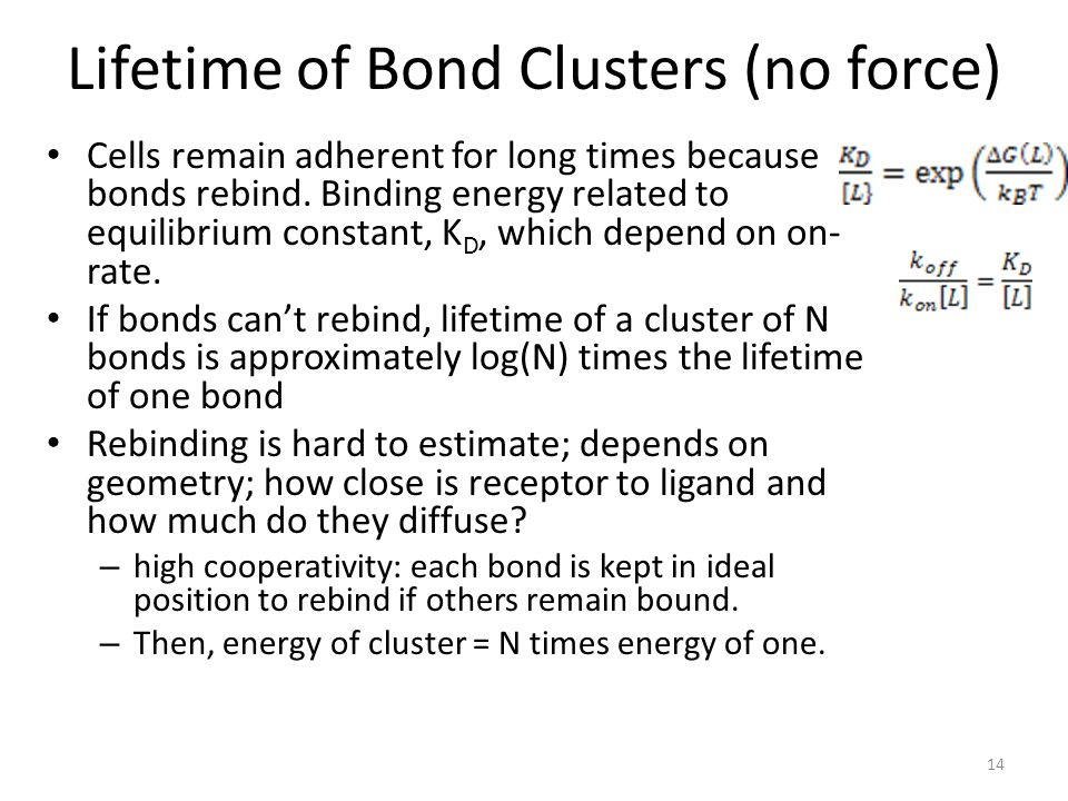 Lifetime of Bond Clusters (no force)