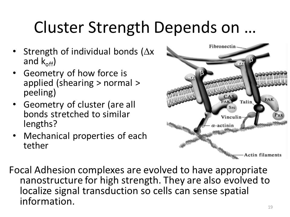Cluster Strength Depends on …