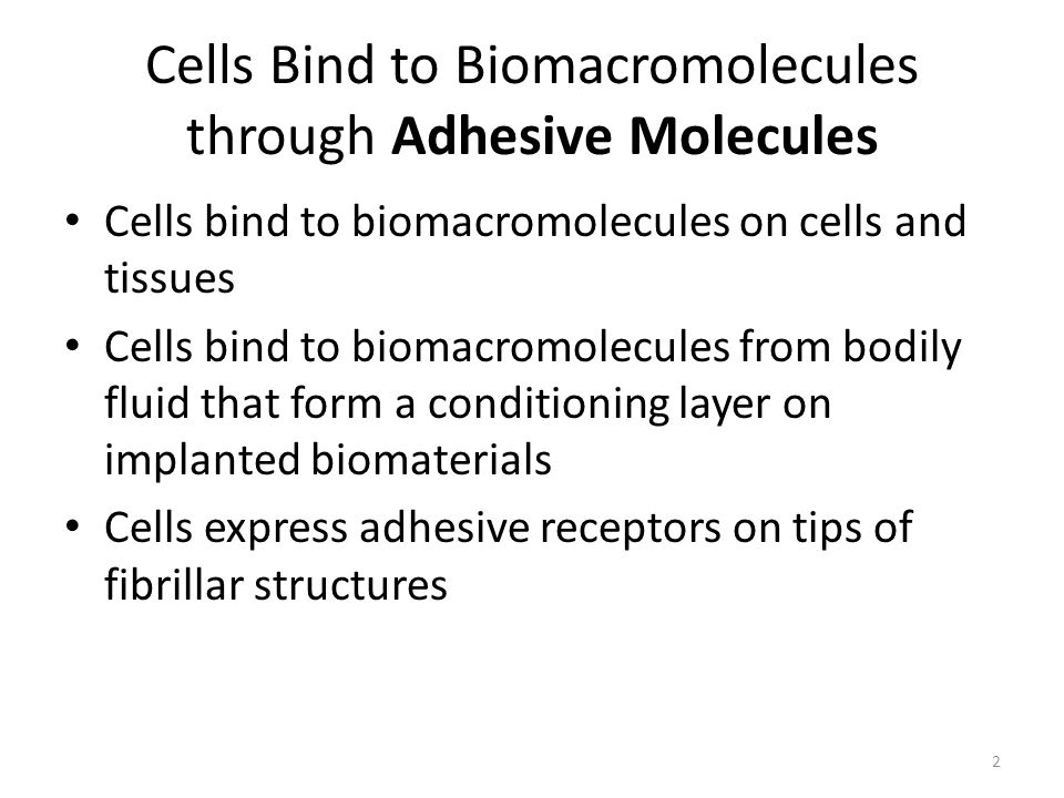 Cells Bind to Biomacromolecules through Adhesive Molecules