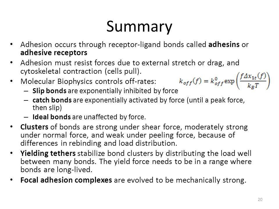 Summary Adhesion occurs through receptor-ligand bonds called adhesins or adhesive receptors.
