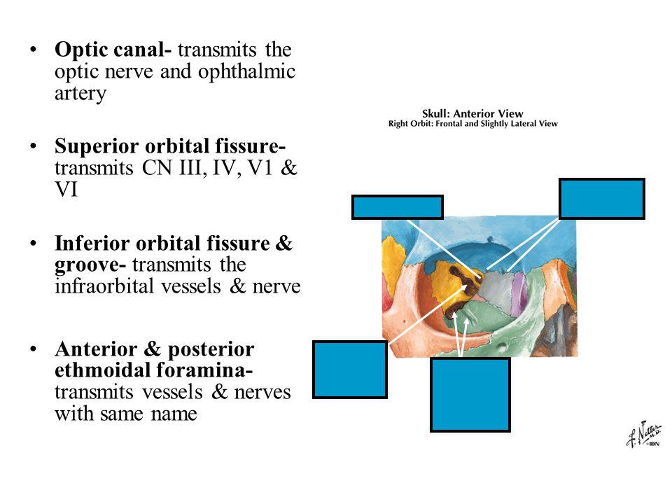 The Imaging of the Orbit Ophthalmic Vein Superior Orbital ...