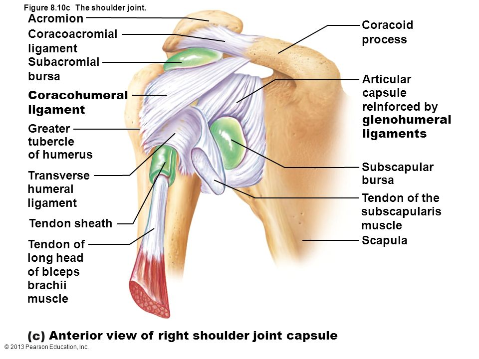 Anterior Shoulder Joint Anatomy 2018 Images Pictures Athlete