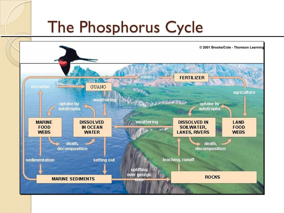 Intro to Biogeochemical Cycles ppt video online download – Phosphorus Cycle Worksheet