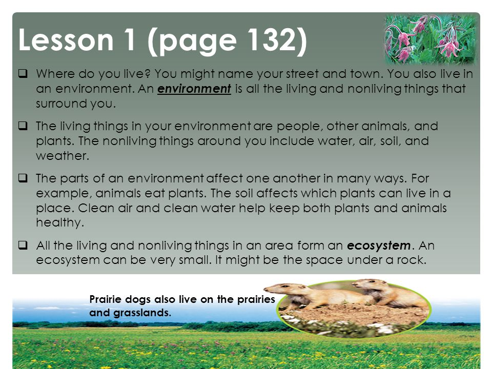 Understanding ecosystems ppt video online download for Living things found in soil