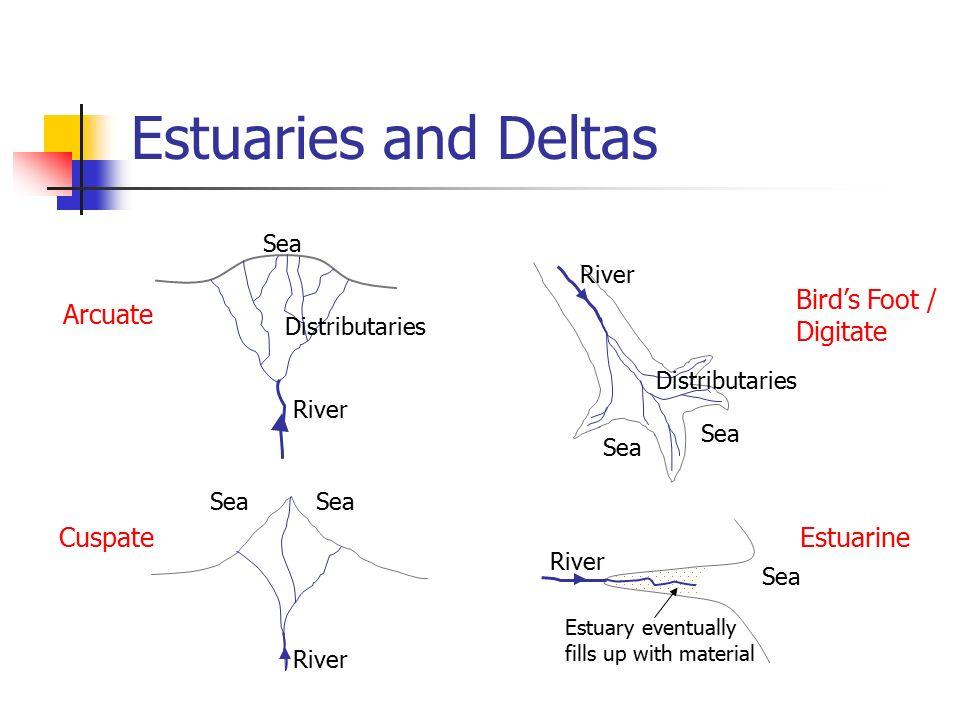River Estuary Diagram Location Of The Itapocu River Estuary And