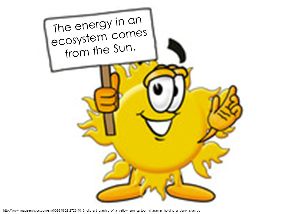 The energy in an ecosystem comes from the Sun.
