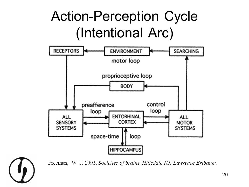 Action-Perception Cycle (Intentional Arc)
