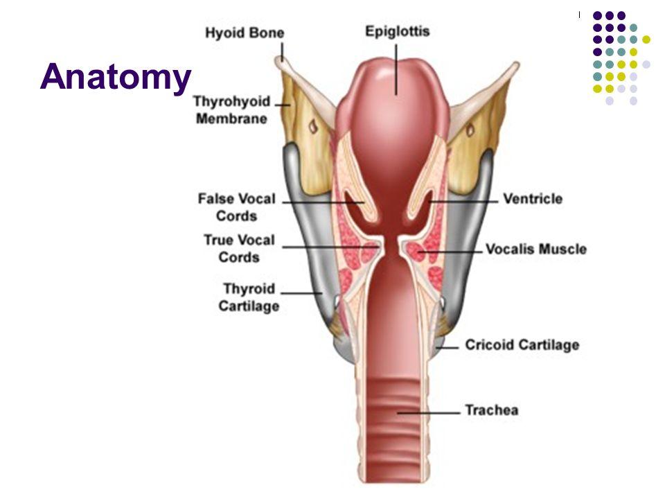 Tolle Kniemodell Anatomie Fotos - Anatomie Ideen - finotti.info