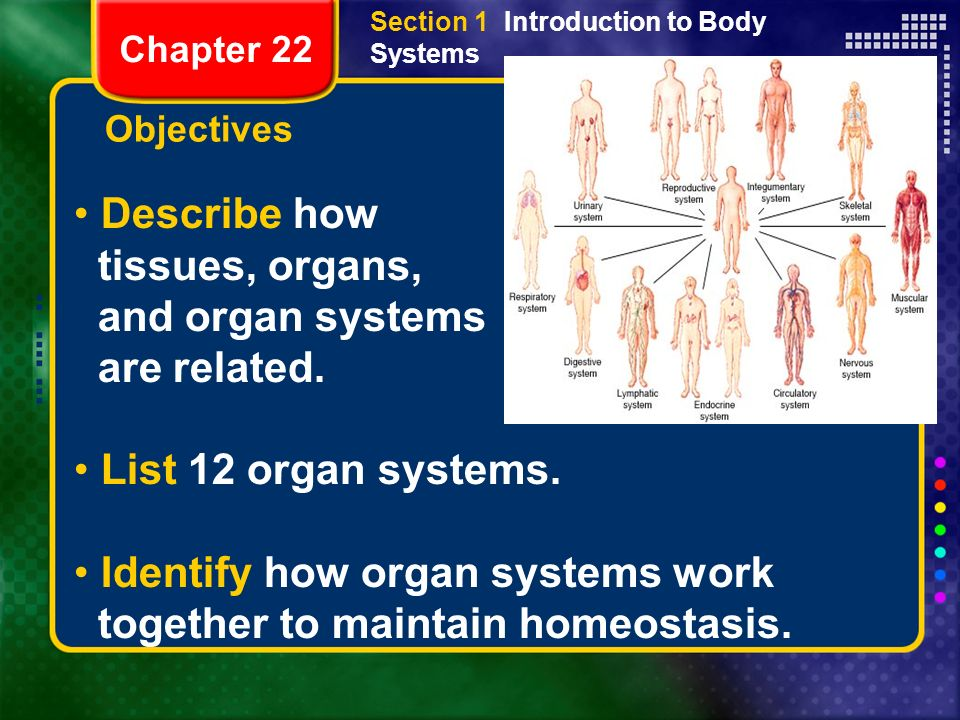 how the body systems work together The nervous system is made up of all the nerve cells in your body it takes in information through our senses, processes the information and triggers reactions, such as making your muscles move or causing you to feel pain.