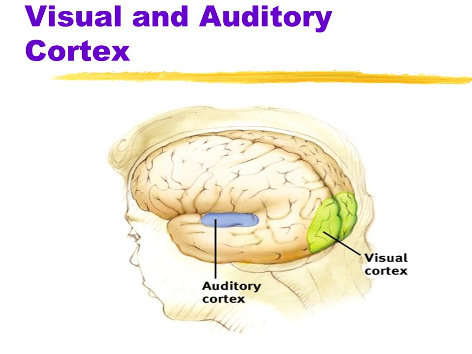 visual vs auditory This science fair project investigates which of two learning modes most commonly used in school, visual and auditory, is better for information retention.