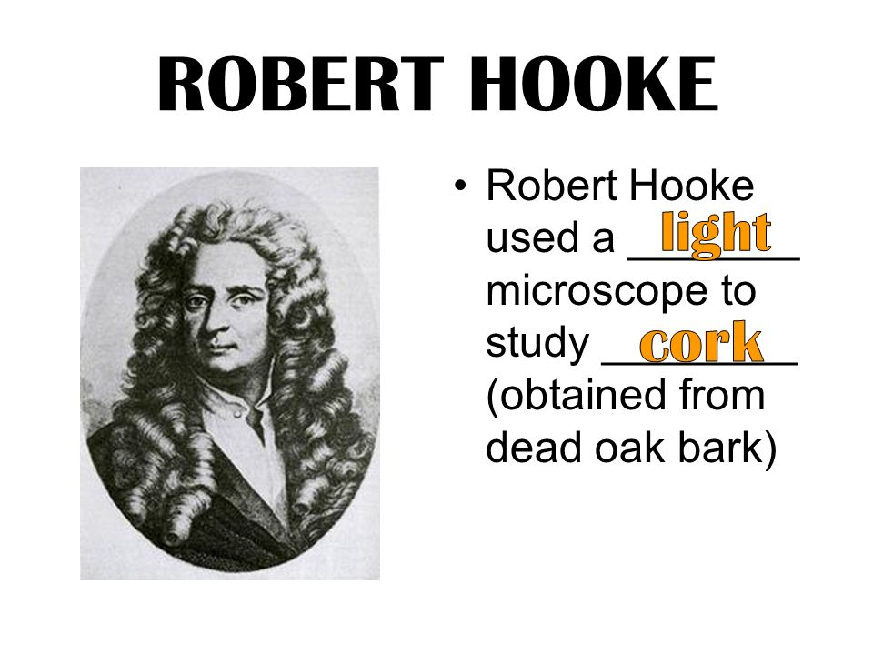 an analysis of the works by robert hooke Hooke's law is a relationship between restoring force and spring displacement or stretch discovered by robert hooke in 1660 about us careers blog understanding hooke's law stress analysis and modelling of materials use hooke's law image sources:.