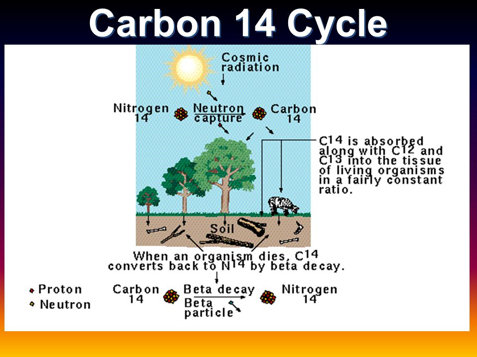 Carbon dating less than 50 years
