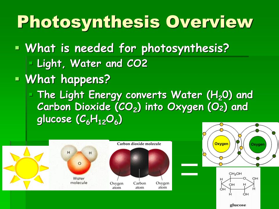 gas necessary for photosynthesis