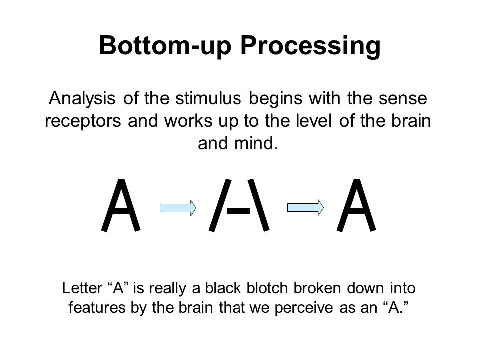 meant bottom up and top down processing sense and perception Chapter 5 objective 1   contrast sensation and perception, and explain the difference between bottom-up and top-down processing objective 2   distinguish between absolute and difference thresholds, and discuss whether we can sense stimuli below our absolute thresholds and be influenced by them.